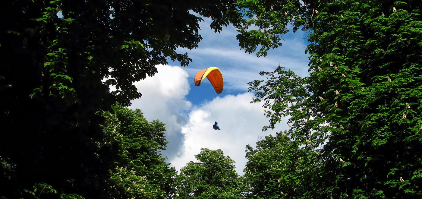 Paraglider in the sky seen through the tree fronds
